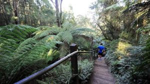The Dandenong Ranges Melbourne